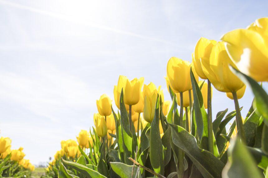 Aanmelden Voorjaarsdag NVKFB & NVF – 13 april